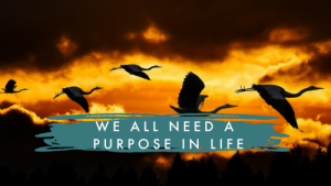A PURPOSE IN LIFE