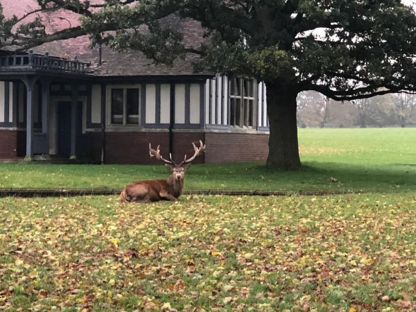woburn deer park
